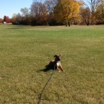 Metro Detroit Dog Training