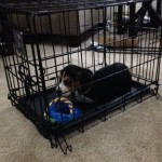Metro Detroit Puppy Crate Training