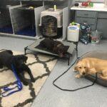 Metro Detroit Dog Training